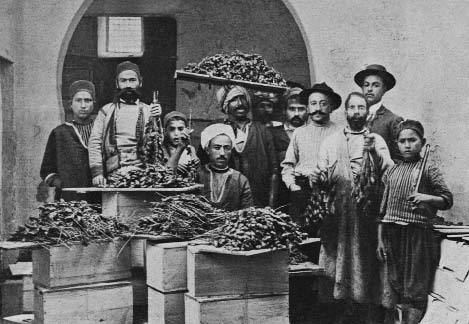 commercio datteri tunisia